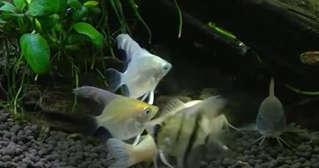 通販で熱帯魚をお迎えしようと思ったら。
